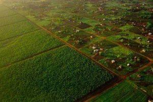 1410-41660-les-cinq-pays-africains-aux-terres-agricoles-les-plus-attractives-selon-land-matrix_l