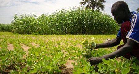 2108-49539-nigeria-une-telerealite-sur-l-agriculture-debutera-en-septembre-prochain_M