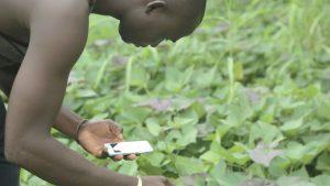 TIC et agriculture la symbiose parfaite pour l'émergence de l Afrique